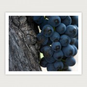 Dry-grown bush shiraz